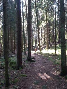 Lintutorni Trunks, Plants, Drift Wood, Stems, Tree Trunks, Plant, Planting, Planets