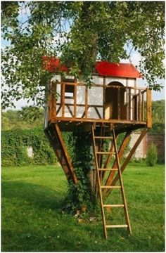 1000 Images About Tree House On Pinterest Treehouse