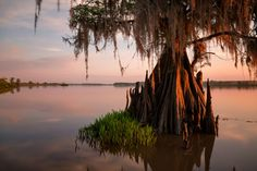 South Carolina's ACE Basin harbors a wealth of wildlife and history. Here, a moss-hung cypress keeps watch over the placid waters of the Lowcountry basin, named for three rivers that run through it: the Ashepoo, Combahee, and Edisto.