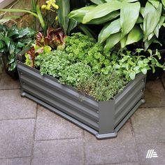 Mini melegágy az ALDI-ból. #aldi #kert Minion, Ale, Plants, Instagram, Ales, Plant, Minions, Planting, Planets