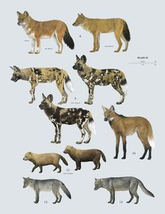 Family Canidae (Dogs)