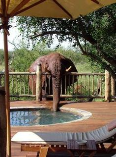 Etali Safari Lodge, Madikwe Game Reserve.  I would love to go here and experience this!