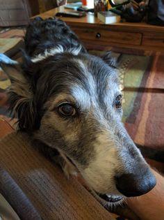 Adopted 13 year old dog Wilbur http://ift.tt/2bte2Gw