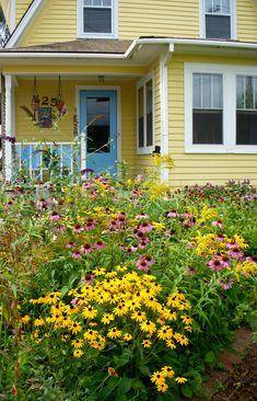 DaisyMae has a cottage garden full of yellow flowers, daisies, daisies & daisies.......