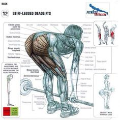 deadlift muscles worked primary - Google Search
