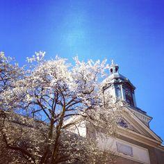 Spring in Gothenburg. 20140325-084253.jpg