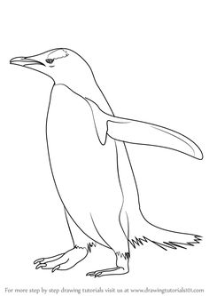 Learn How to Draw a Gentoo Penguin (Antarctic Animals) Step by Step : Drawing Tutorials