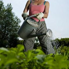 You can use companion planting to eliminate pests without using toxic pesticides. Read more here to learn which plants work side by side. Organic Gardening, Gardening Tips, Organic Weed Control, Diy Pest Control, Natural Pesticides, Plant Diseases, Fall Vegetables, Weed Killer, Garden Guide