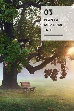 Celebration Of Life Idea 03 Plant A Tree In Your Loved One S Name