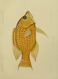 Bd. 4 - Journal des Museum Godeffroy. - Biodiversity Heritage Library