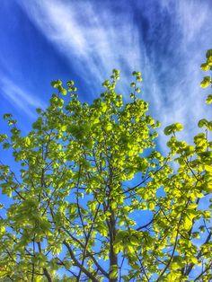 Kevään värit