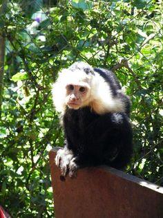 Jungla de Panama Wildlife Refuge, Boquete: See 126 reviews, articles, and 138 photos of Jungla de Panama Wildlife Refuge, ranked No.13 on TripAdvisor among 44 attractions in Boquete.