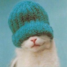 Hace Frío!