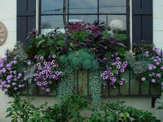 Fall Window Box by Detroit Garden Works - a wonderland of fabulous things (Sylvan Lake, MI)