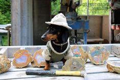 I struck it rich!! Read more: http://www.celebritydachshund.com/2014/07/23/dachshund-canoeing-camping-mining/