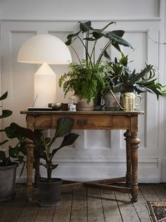 Indoor jungle with my all time favorite the atollo lamp