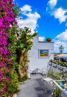 Veranda Surrounded by Green Cactus and Pink Bougainvillea - Garden Ideas, See More >>> Worth It, Pool Garden, Rooftop Garden, Garden Farm, Fence Garden, Garden Water, Garden Edging, Dream Garden, Garden Plants
