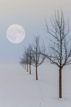 lsleofskye:  Mondscheinserenade