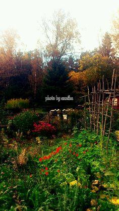 Autumn in the garden!