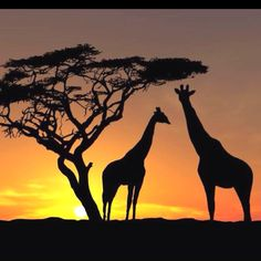 ...and to all, a giraffe night <3