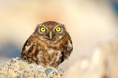 40 Angry Birds Who Don't Give A Hoot About What You Think