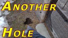 Sink Holes #148 Ducks & Winter 2016-17