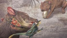 Didelphodon vorax), an early marsupial relative, lived during the last few million years of the Mesozoic, or dinosaur age, in what is now present-day Montana and North Dakota