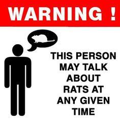 #rats #ratties #rat