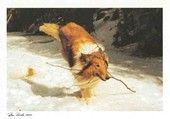 Pitkäkarvainen collie | Perromania - pieni postikorttikauppa