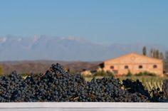 Happy Malbec day!! Argentina Wines!