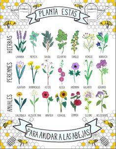 Plantas para ayudar a las abejas #biodiversidad #polinizacion