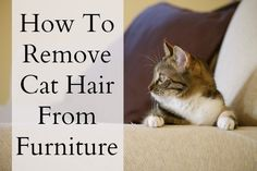 1000 Ideas About Remove Cat Hair On Pinterest Cat Urine Smells Pet Vacuum And Cat Urine