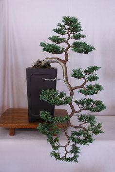 Bonsai tree by Prox-Photography