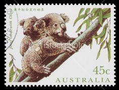 Google Image Result for http://i.istockimg.com/file_thumbview_approve/8421228/2/stock-photo-8421228-australia-koalas-postage-stamp.jpg
