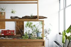 Brooklyn architect and designer Huy Bui is building stacked terrariums to solve a dilemma many city dwellers have: not enough space. Gardenista: Sourcebook for Cultivated Living Air Plants, Indoor Plants, Big Living Rooms, York Restaurants, Interior Plants, Plant Design, My Dream Home, Outdoor Spaces, Ladder Decor