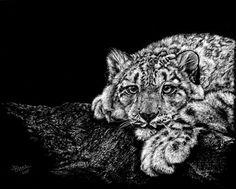 Snow Leopard 8x10 Scratchboard Art Print by jlblake on Etsy
