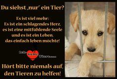 """Du siehst """"nur"""" ein Tier? Es ist viel mehr: Es ist ein schlagendes Herz, es ist eine mitfühlende Seele und es ist ein Leben, das einfach leben möchte! http://www.ich-liebe-tiere.com/"""
