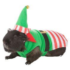 guinea pig costumes petsmart | All Living Things™ Elf Costume - Apparel - Small Pet - PetSmart
