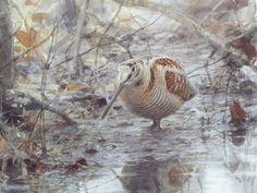 Lars Jonsson's painting of a woodcock. Wildlife Paintings, Wildlife Art, Grouse Hunting, I Like Birds, Brittany Spaniel, Outdoor Paint, Sports Art, Bird Art, Beautiful Birds