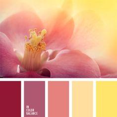 amarillo soleado, amarillo vivo, color amarillo sonrosado, combinación de colores, elección del color, frambuesa, matices de color guinda, rosa aberenjenado, rosa amarillento, rosa pastel, rosado claro, rosado fuerte, selección de colores, tonos amarillos, tonos cálidos, tonos rosados.