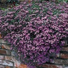 1000 Images About Retaining Wall Plants On Pinterest