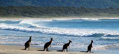 Example itinerary: South East Coast, Australia