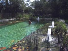 Retrouver le plaisir de la baignade naturelle avec une piscine biologique Natural Swimming Ponds, Swimming Pools, Pool Water Features, Pond Ideas, Lovely Creatures, Dream Pools, Garden Features, Biologique, Cool Pools