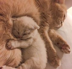 Mel Cat : Photo
