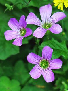 Garden, Nature, Leaf, Garden, Outdoor, Flower #garden, #nature, #leaf, #garden, #outdoor, #flower