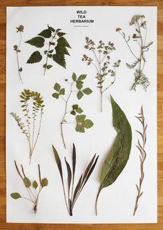 wild tea herbarium by Christien Meindertsma