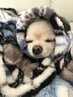 Puppy Parka..snug and smug.