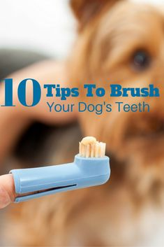 On Your Mark, Get Set, Brush! Check our our ten tips for brushing their teeth.