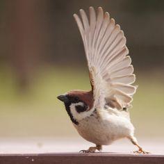 A selection of bird photos Cute Birds, Pretty Birds, Beautiful Birds, Animals Beautiful, House Sparrow, Sparrow Bird, Animals And Pets, Funny Animals, Cute Animals