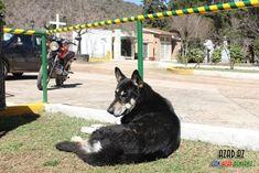 Beni dışarı koymuyorlar😣😢 Goats, Animals, Close Up, Eyes, Diy Dog, Animales, Animaux, Animal, Animais